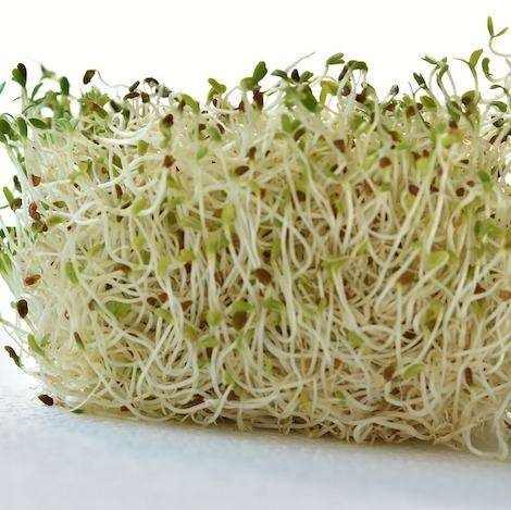 Alfalfa Sprouts Fresh fruit vegetables home delivery Caboolture Bribie Island Burpengary Morayfield Beachmere Sandstone Point Toorbul Ningi Banksia Beach Bellara White patch Bongaree